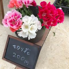 花のある暮らし/ガーデニング/園芸/稲城市/至福のひととき/暮らし/... 家の前にて花苗、切り花販売しはじめました…