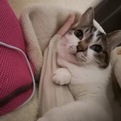 猫のいる暮らし  今日も一日お疲れ様です(´・・`)︎︎…(1枚目)