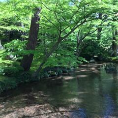 GW/風景/わたしのGW 金沢 兼六園