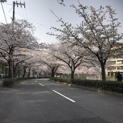 春のフォト投稿キャンペーン 春🌸