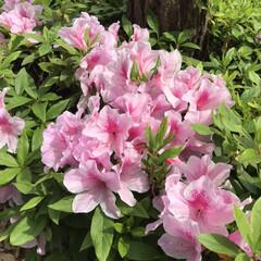 春のフォト投稿キャンペーン/はじめてフォト投稿 出勤前に。 普段あまり花なんて意識して見…(1枚目)