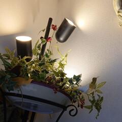 おうち時間/素敵空間コンシェルジュ/おしゃれ/リビングあるある/暮らし 緑に間接照明 そしてテーブルランナーの代…(2枚目)