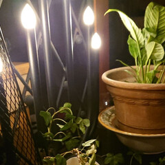 おうち時間/素敵空間コンシェルジュ/おしゃれ/リビングあるある/暮らし 緑に間接照明 そしてテーブルランナーの代…(3枚目)