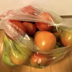 トマト/夏野菜 もぎたてトマト🍅 トマト農家のママ友から…(2枚目)