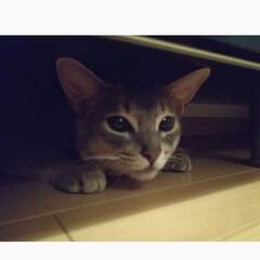 ネコ/猫がいる生活/猫がいる暮らし/猫部/にゃんこ同好会/うちの子自慢 夜中2時にガサゴソ音が…  いつもはこん…
