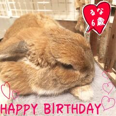 うちの子自慢/うさぎ/ウサギ/ペット/小動物/垂れ耳/... こんにちは☀️ 本日6月3日でるなが6歳…
