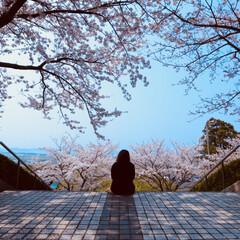 ありがとう平成/平成最後の一枚 平成最後の桜。今年は天候にも恵まれ、平成…