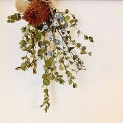 お花のある生活/お花のある暮らし/スワッグ/あけおめ/冬/おうち/... 家にある花材で、初スワッグ💐✨ この連休…