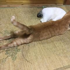 猫派 また伸びてるね〜