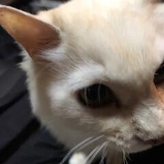 家族/猫派/にゃんこ同好会 なんだよ!