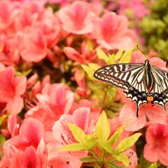 Nikon/写真好きと繋がりたい/春のフォト投稿キャンペーン/おでかけワンショット モデル🦋さん いてたから 花がすごく映え…