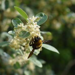 写真好きと繋がりたい/ハチ/春のフォト投稿キャンペーン 優柔不断なハチ🐝だった。(1枚目)
