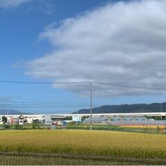 ゴーヤ/家庭菜園/今日の空/フォロー大歓迎/LIMIAファン/青空白い雲 こんばんは! 今日の空 青い空と白い雲と…