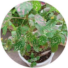 植物と暮らす/おすすめアイテム/フォロー大歓迎/LIMIAファンクラブ/LIMIAな暮らし 先日、オシャレなお花屋さん💐があったので…
