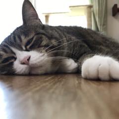 にゃんこ同好会/至福のひととき/暮らし/LIMIA/おやすみショット テレビ前で眠るとろろさん きっとどんな時…