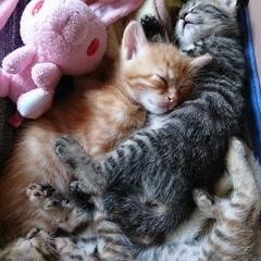 おやすみショット みんな幸せになろうね❤️