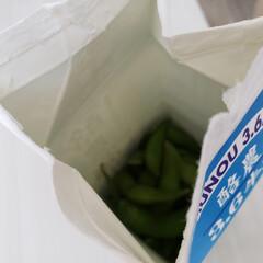 牛乳パック/フォロー大歓迎/収納/暮らし/節約 枝豆‼️茹でました‼️ 冷やして🍺と一緒…