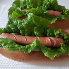 サンチュ/家庭菜園 作ってみたよ😃 ケチャップなどはお好みで😃(1枚目)