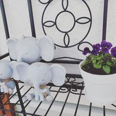玄関飾り/ビオラ/花壇の花/住まい/暮らし 今日は花壇の草取り。 沢山咲いてたビオラ…(1枚目)