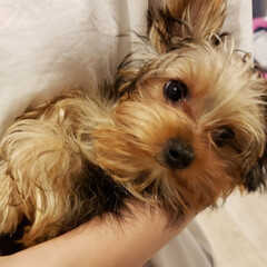 女の子/抱っこ/愛犬と暮らし/暮らし 抱っこ🎵 4ヵ月になりました~😆