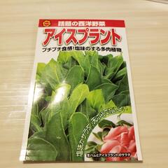 チャレンジ/野菜/家庭菜園/節約 今回はアイスプラントにチャレンジ‼️(1枚目)