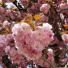 癒し/♥️/ハート/桜/春 桜と私(笑)😁(1枚目)