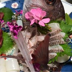 刺身/お造り/鯛/フォロー大歓迎/おうちごはんクラブ こちらも父のお料理!鯛のお造りです。子供…(2枚目)