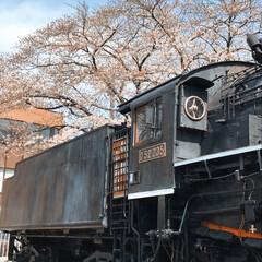 公園/桜/春/LIMIAおでかけ部/おでかけ/風景/... 機関車のある公園で遊んできました!桜は四…