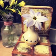 息子から/壺/ミニチュア雑貨/ミニチュア/お花/フォロー大歓迎/... またまた四歳の息子が私にあのお花を摘んで…