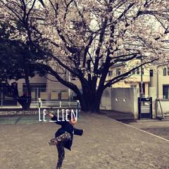 幼稚園/満開の桜/さくら/桜/フォロー大歓迎/風景/... 幼稚園の園庭の桜が満開でしたー!!年中組…
