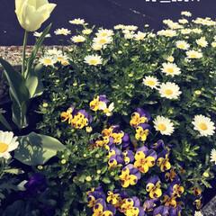 おはな/春爛漫/花壇/フォロー大歓迎/風景/春の一枚 色んなお花がいっぱい咲いていました💕💕春…