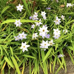 お花/はる/春/道端/フォロー大歓迎/おでかけ/... 先日、四歳の次男が摘んできてくれたお花と…