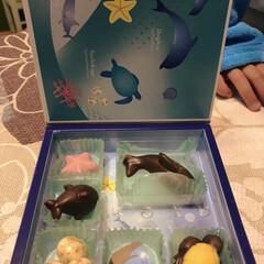 イルカ/チョコレート/バレンタインデー/フォロー大歓迎/スイーツ/バレンタイン2019 息子がクラスのお友達からいただいたチョコ…