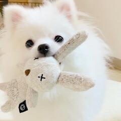犬用おもちゃ ダッドウェイ アニマル・プラッシュトイ ラビット(おもちゃ)を使ったクチコミ「うさぎのうーさん🐰 お迎え入れの日から …」
