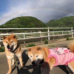 はじめてフォト投稿/LIMIAペット同好会/わんこ同好会/おでかけワンショット 朝散歩でキレイな虹が出てたよ   #お出…(1枚目)