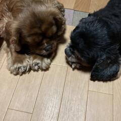 仲良し/愛犬 仲良ししてるように見える二人🐶🐶 たまた…