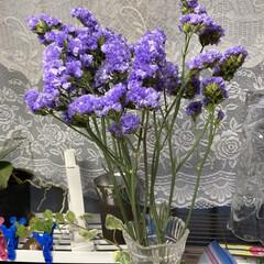 半額/切り花 スーパーで半額で買いました。切り花も半額…(1枚目)