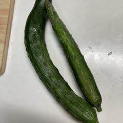 新鮮無農薬/夏野菜/家庭菜園 家庭菜園で採れた野菜たち、ありがたく食べ…(2枚目)