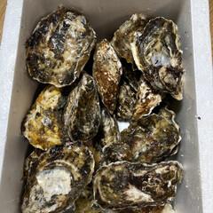 牡蠣/ネットショップ 牡蠣をネット注文で買いました。松島産の牡…