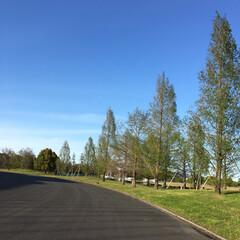 青空 昨日お天気だったので近場にある大きな公園…