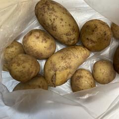 新鮮無農薬/夏野菜/家庭菜園 家庭菜園で採れた野菜たち、ありがたく食べ…(1枚目)