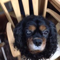 愛犬 こあきちゃん❤️いつも同じポーズの写真😅