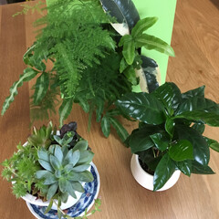 植物 私のオアシス、見てるだけで癒されます。