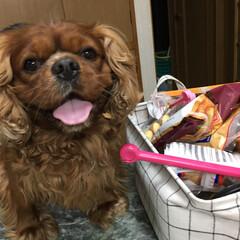 愛犬 お菓子がいっぱい入った入れ物の横で、これ…