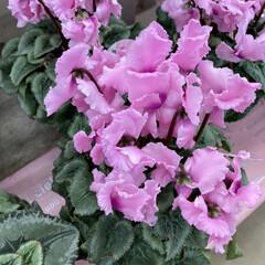 花屋さんの花/花 お花屋さんで綺麗だったから写真撮りました…(2枚目)