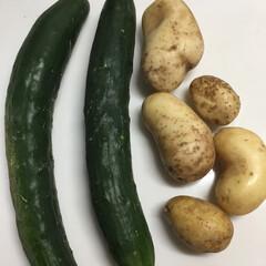 手作り野菜/家庭菜園 我が家の家庭菜園で採れたキュウリとジャガ…