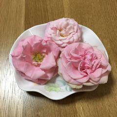 薔薇 薔薇の花を切り器に水入れて置いただけです…