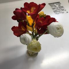 ラナンキュラス ラナンキュラスがようやく咲き始めました。…
