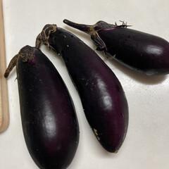 新鮮無農薬/夏野菜/家庭菜園 家庭菜園で採れた野菜たち、ありがたく食べ…(3枚目)