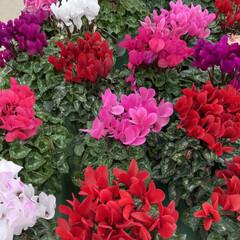 花屋さんの花/花 お花屋さんで綺麗だったから写真撮りました…